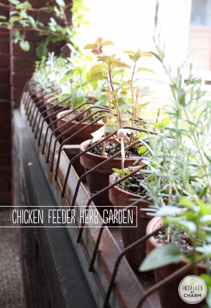 Chicken Feeder Herb Garden via Inspired by Charm