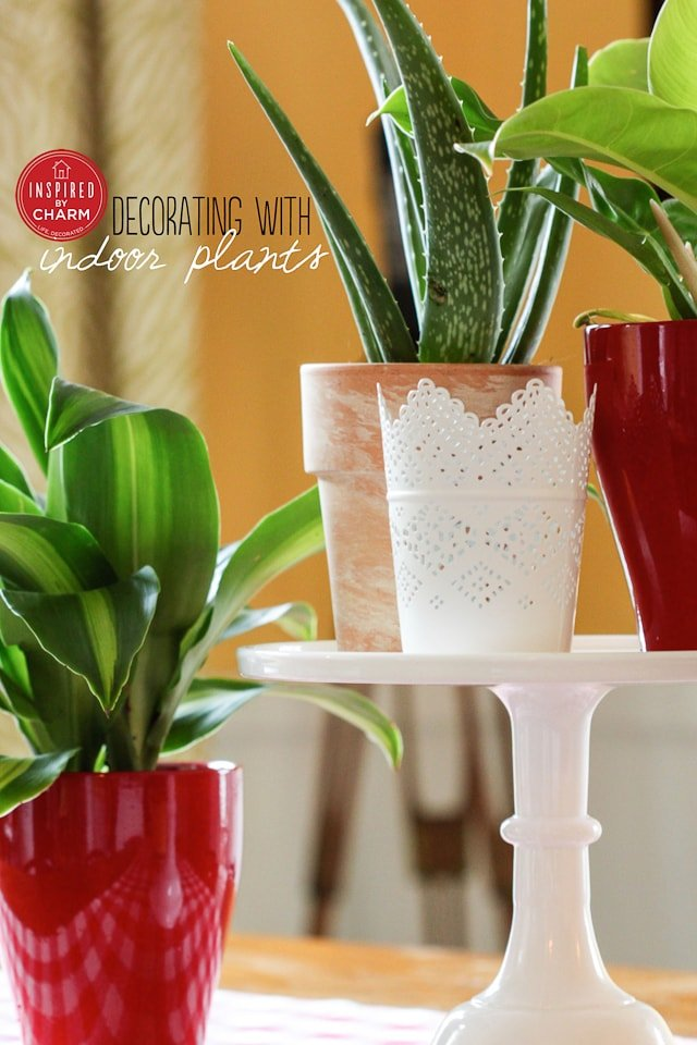 Indoor Plants | Inspired by Charm