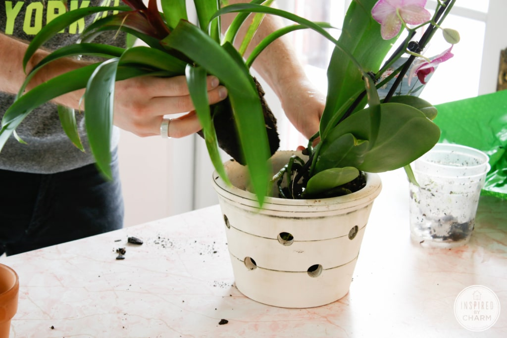 Flowering Indoor Plants on a Budget | Inspired by Charm #31daysofhome