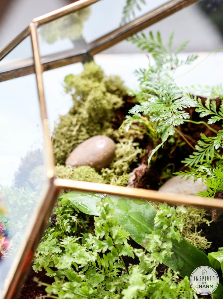 Fern Terrarium | Inspired by Charm