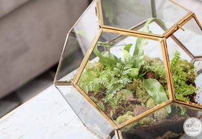 Fern Terrarium | Inspired by Charm
