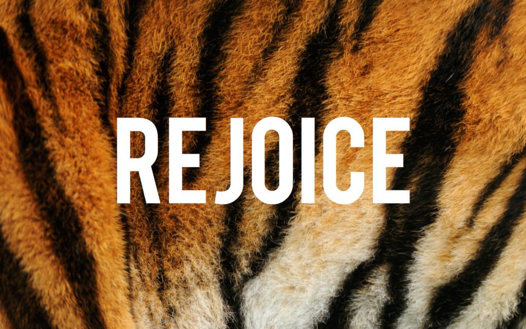ROAR | Inspired by Charm #roar