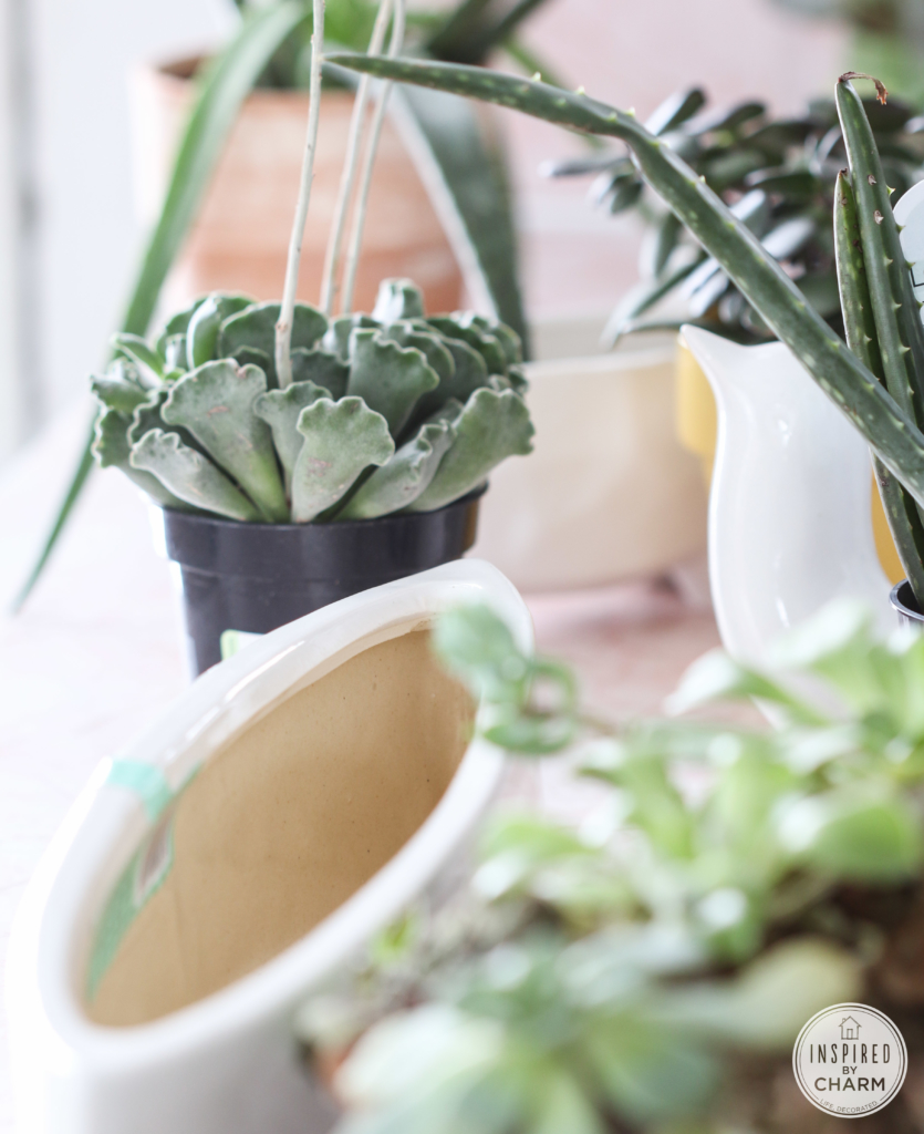 Houseplant Love | Inspired by Charm