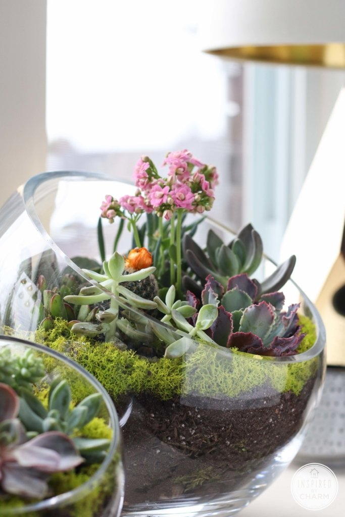 Succulent Garden Bowl Inspired by Charm