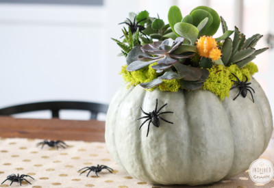 Succulent Pumpkin Planter | Inspired by Charm