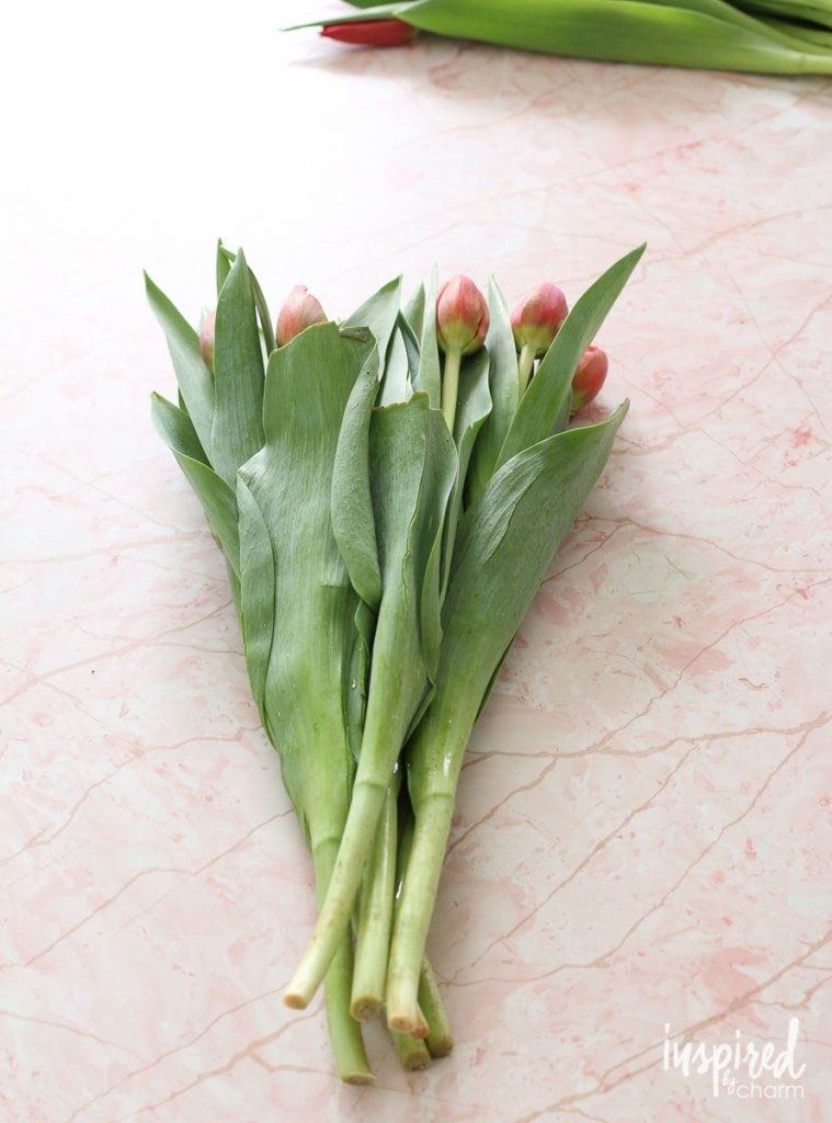 Arranging Tulips | Inspired by Charm