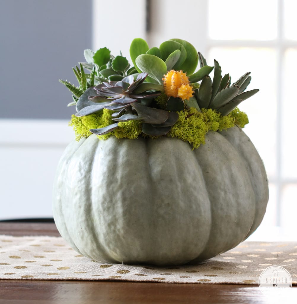 Succulent Pumpkin Planter DIY - Favorite Fall Decor Ideas | Inspired by Charm