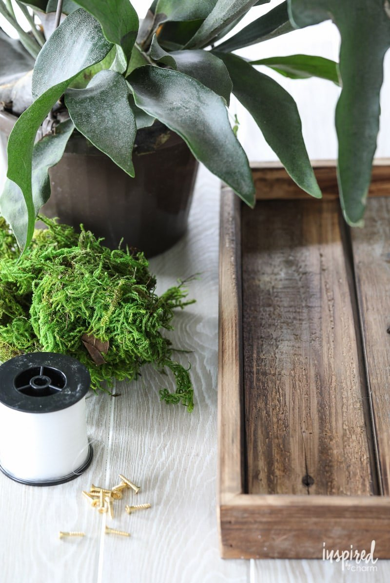 Tutorial to learn how to make a DIY Mounted Staghorn Fern #diy #staghorn #plants