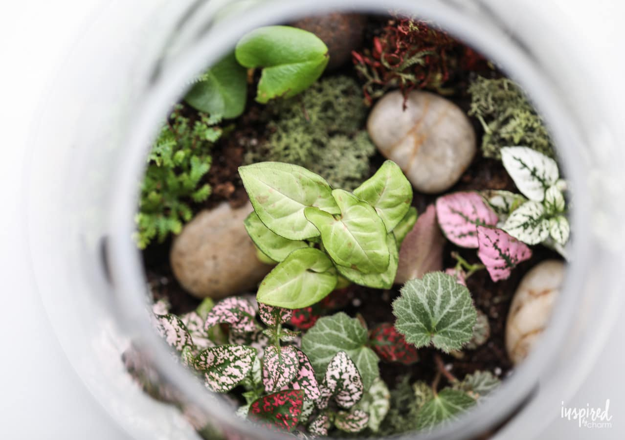 How To Make A Terrarium Step By Step Tutorial